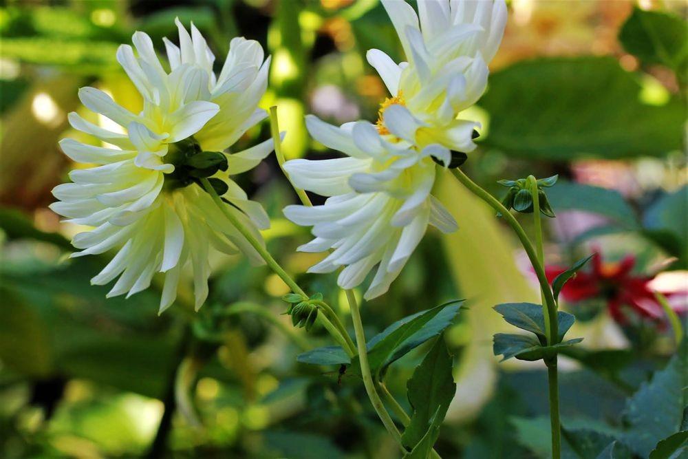 花卉日记--102_图1-7