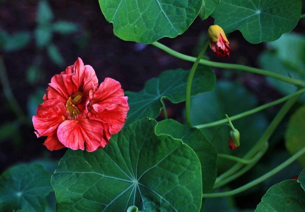 花卉日记--102_图1-8