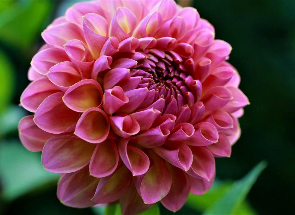 花卉日记--102_图1-14