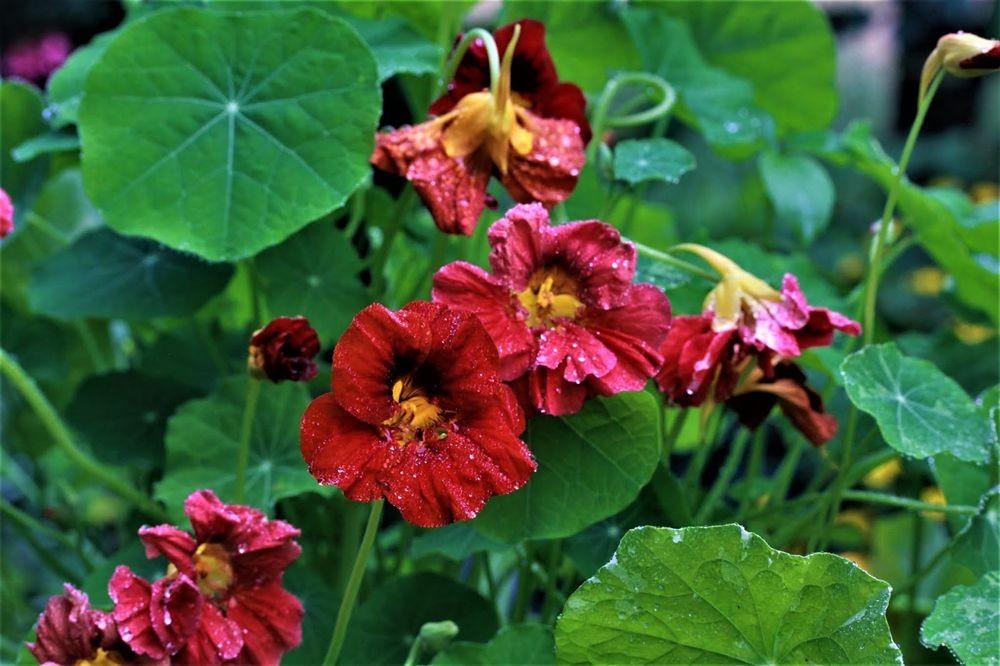 花卉日记--102_图1-13
