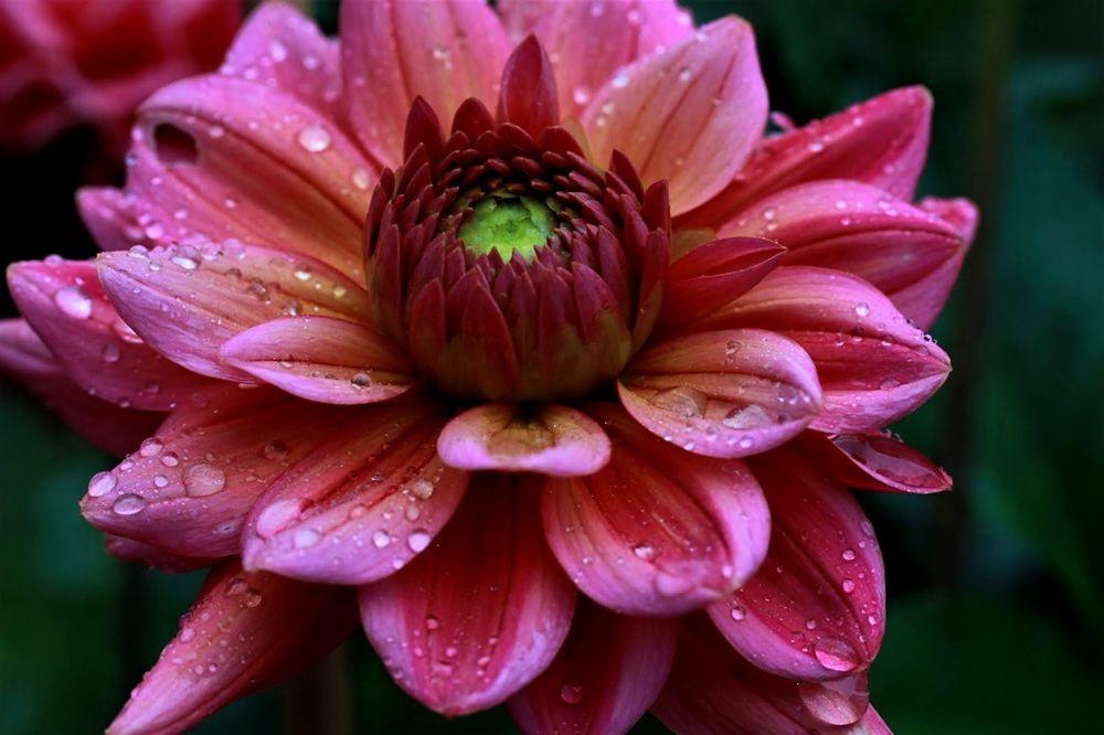 花卉日记--102_图1-16