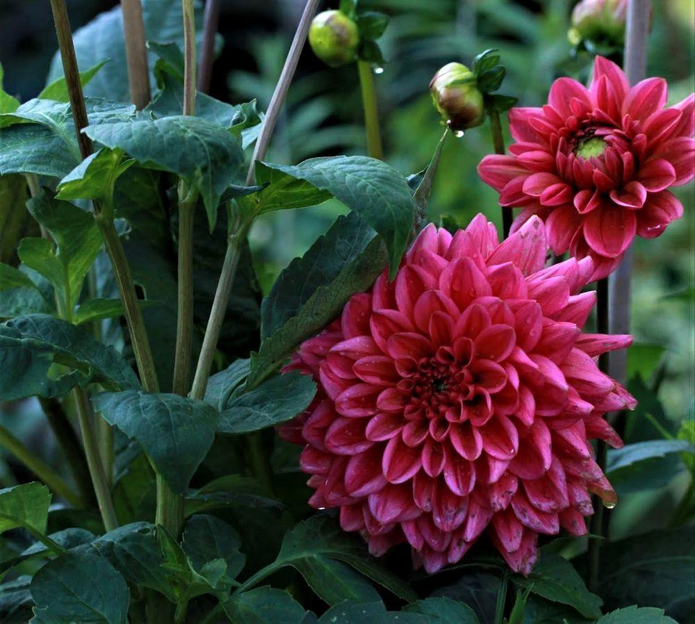 花卉日记--102_图1-17