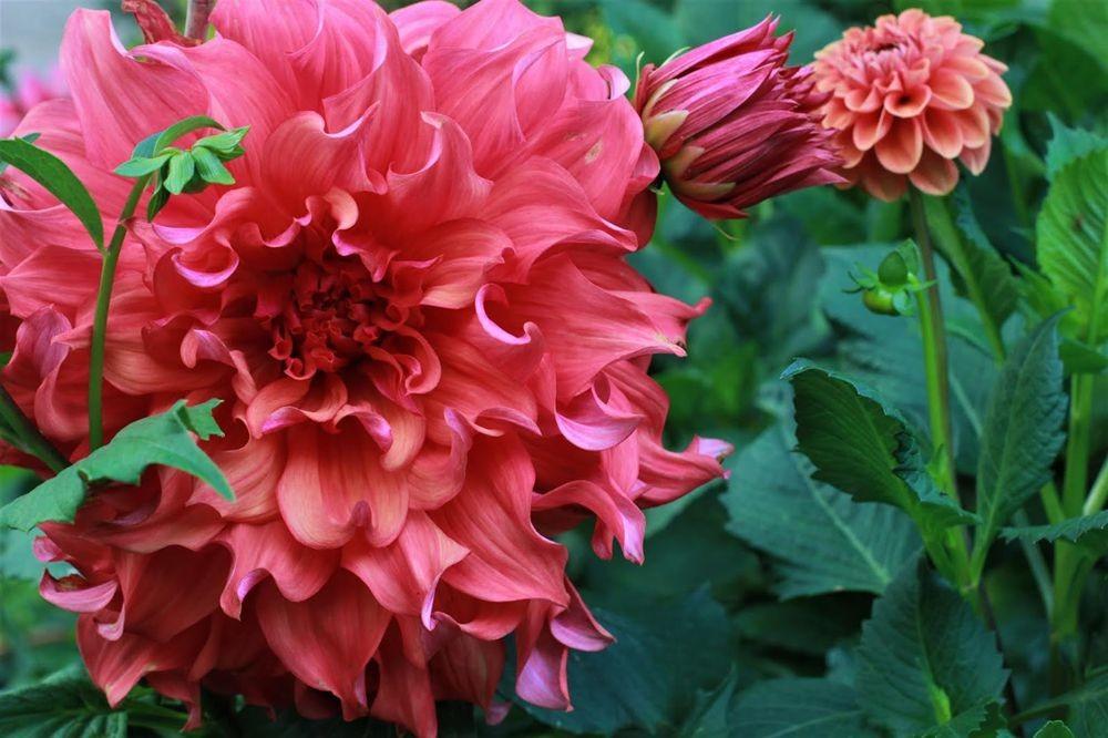 花卉日记--102_图1-18