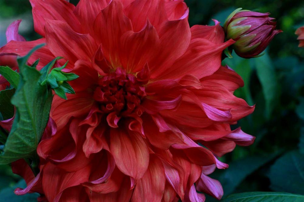 花卉日记--102_图1-19