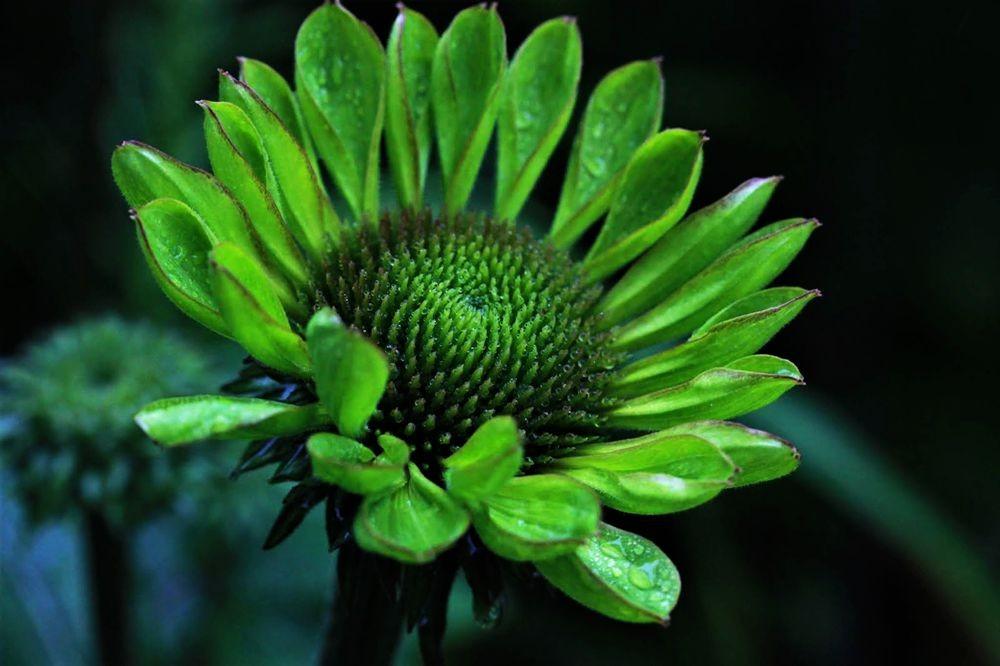 花卉日记--102_图1-21