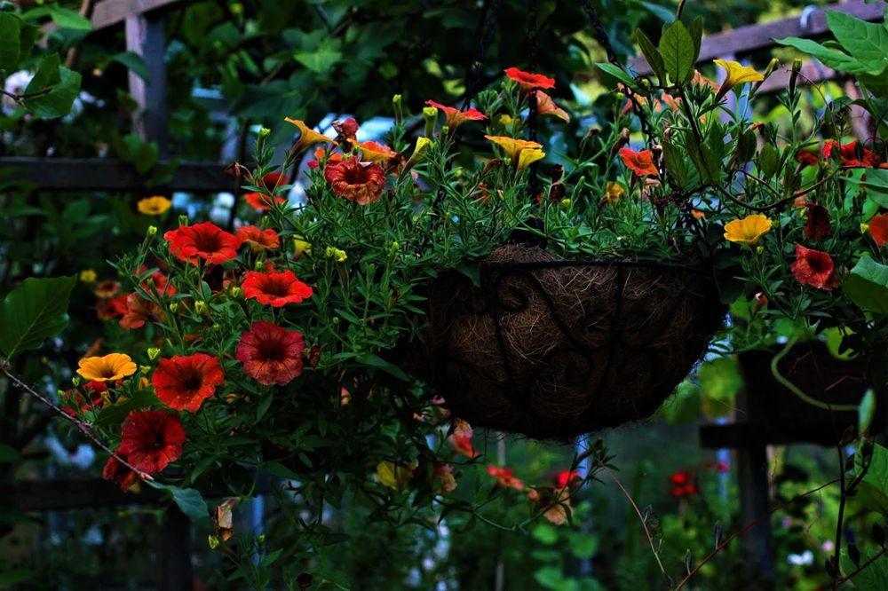 花卉日记--102_图1-23