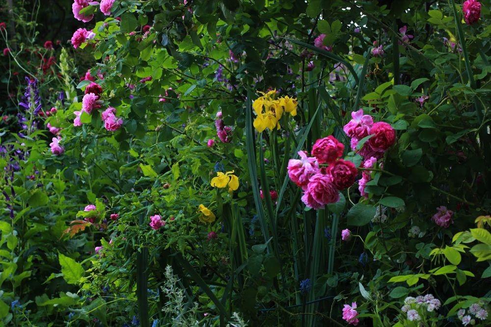 花卉日记--102_图1-24