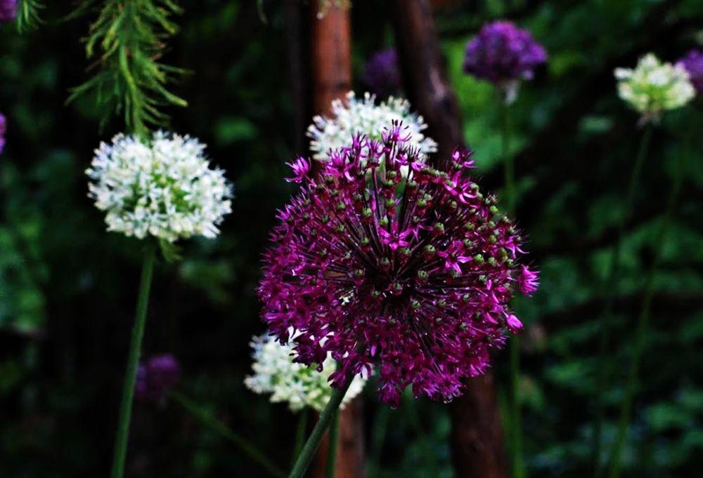 花卉日记--102_图1-25