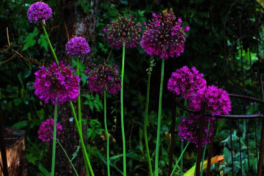 花卉日记--102_图1-26