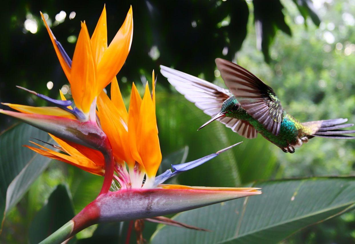 哥斯达黎加共和国_图1-24