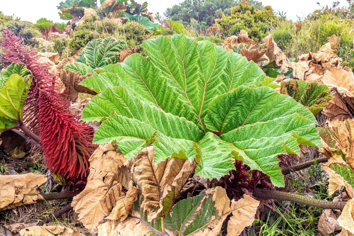 哥斯达黎加共和国-3_图1-21