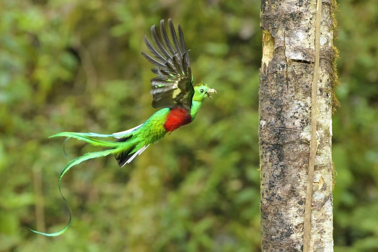 哥斯达黎加共和国-3_图1-23