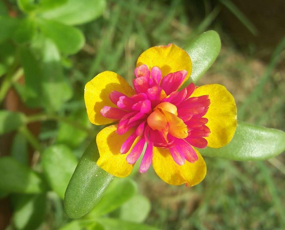 花卉日记-105_图1-4