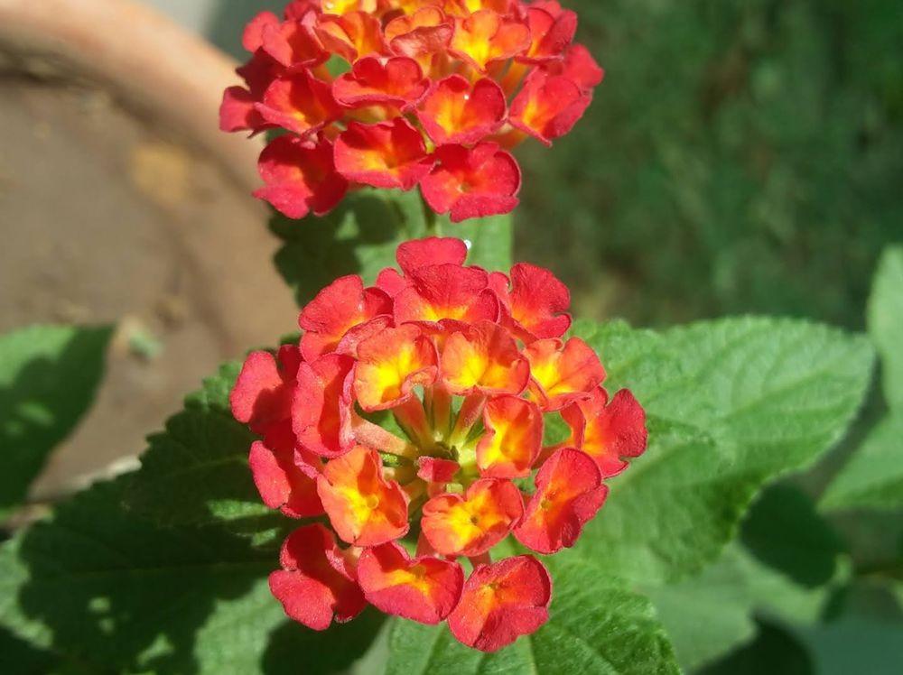 花卉日记-105_图1-5