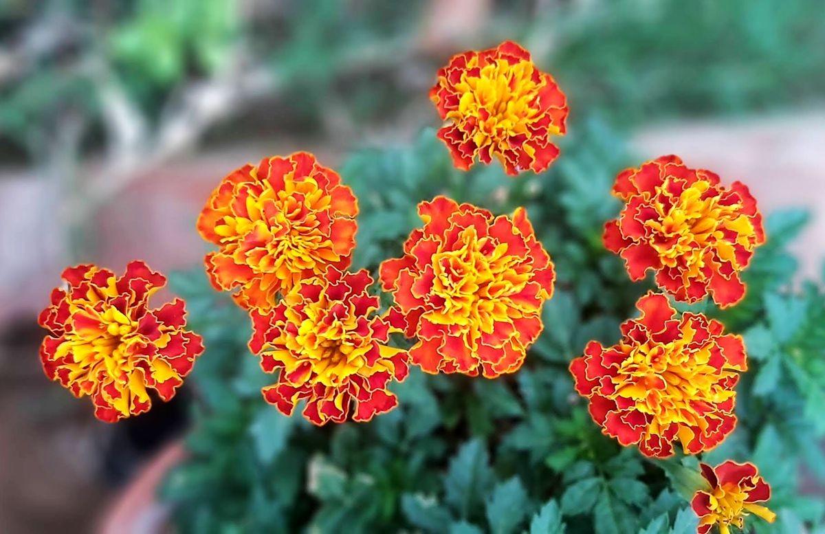 花卉日记-105_图1-6