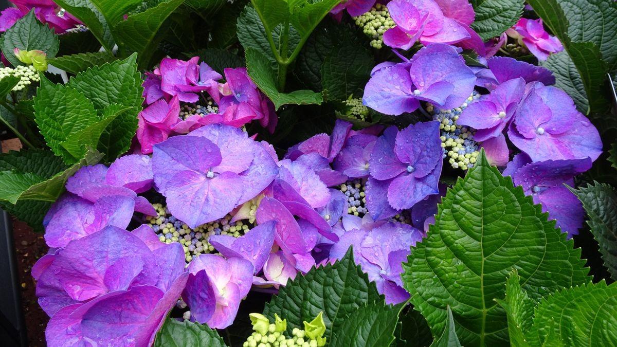花卉日记-105_图1-8
