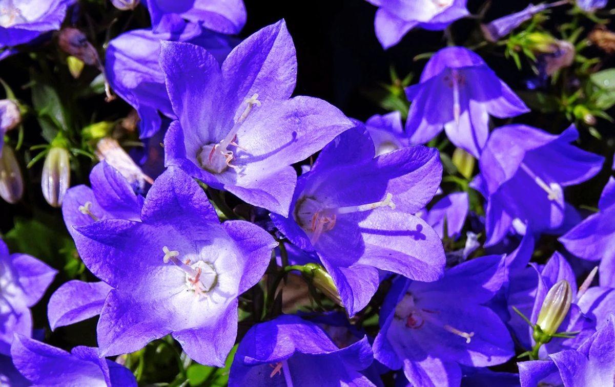 花卉日记-105_图1-9