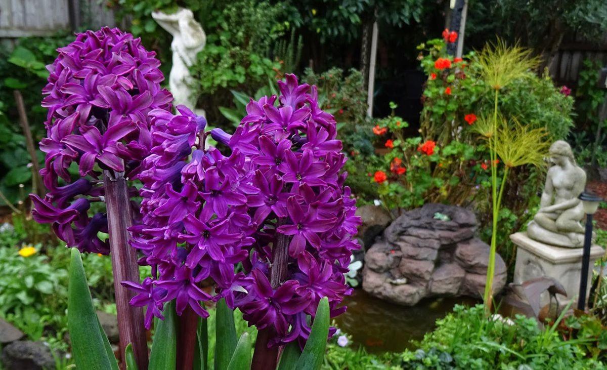 花卉日记-105_图1-11