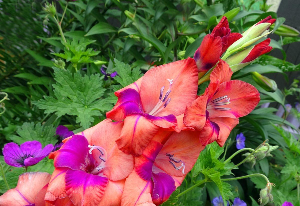 花卉日记-105_图1-12