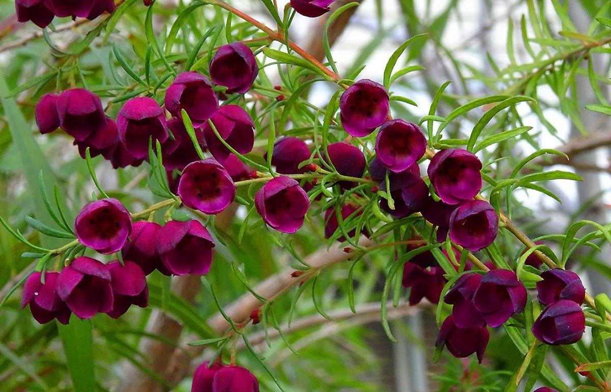 花卉日记-105_图1-16