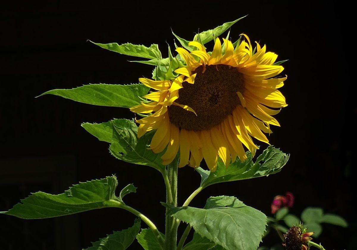 花卉日记-105_图1-17