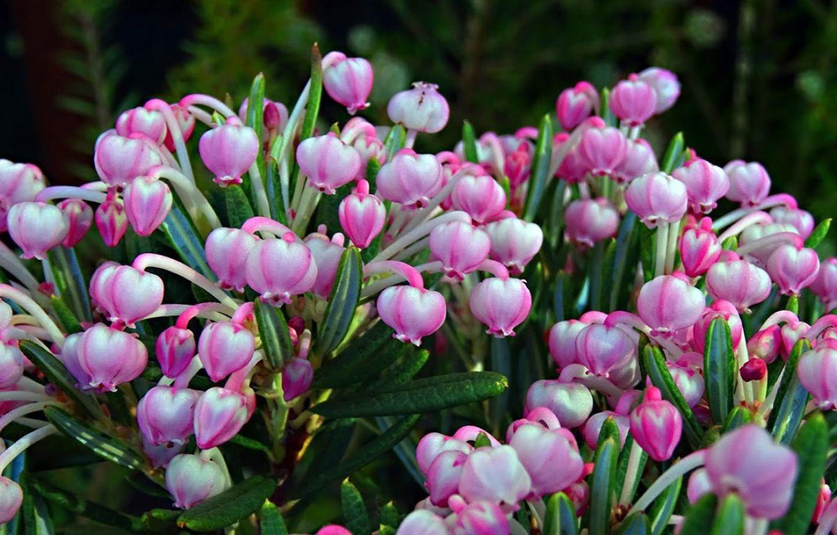 花卉日记-105_图1-20