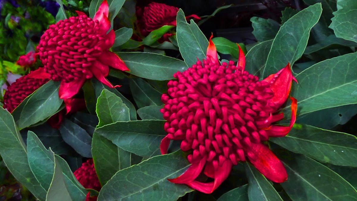 花卉日记-106_图1-4