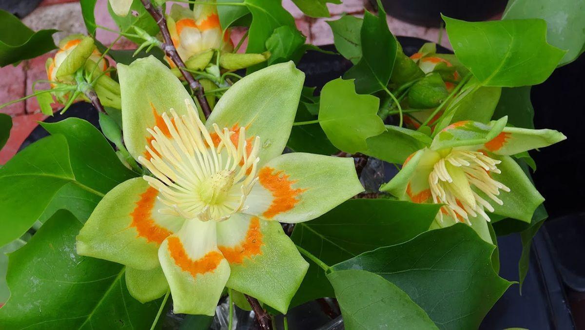花卉日记-106_图1-5
