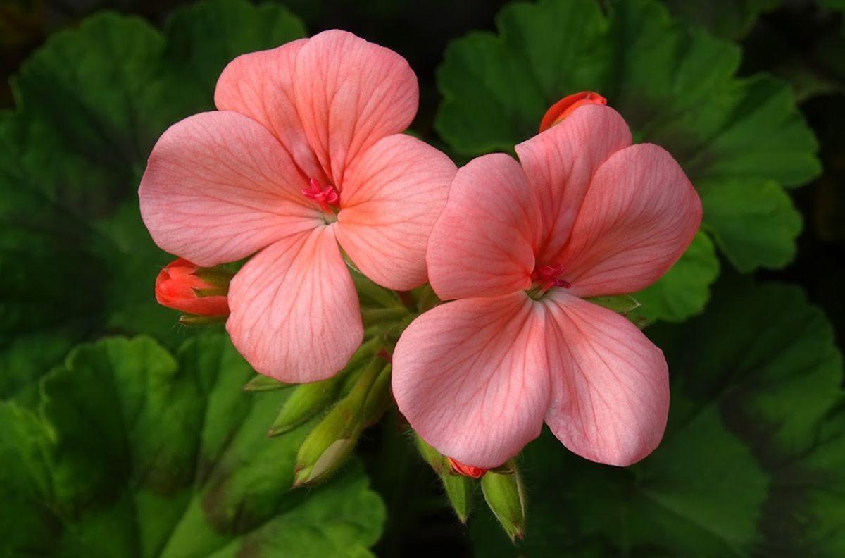 花卉日记-106_图1-6