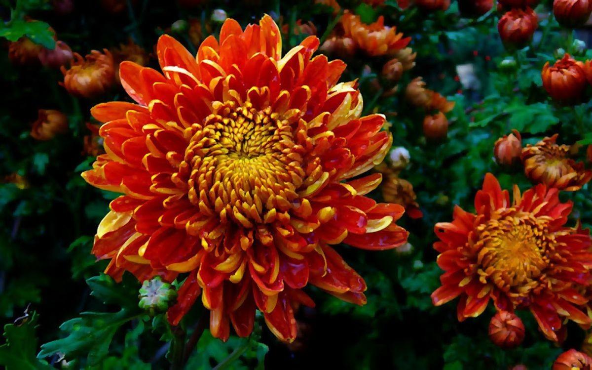 花卉日记-106_图1-7