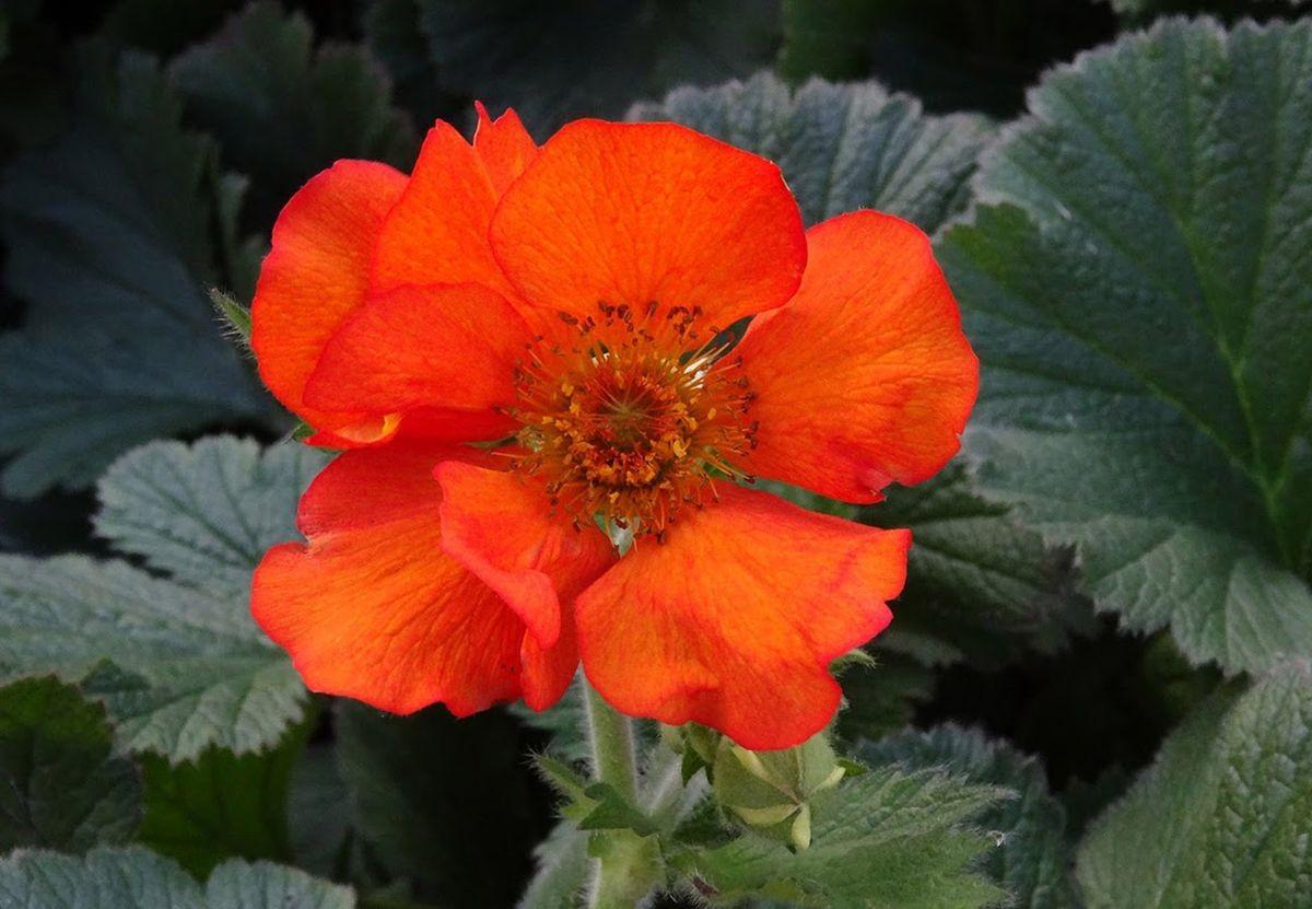 花卉日记-106_图1-8