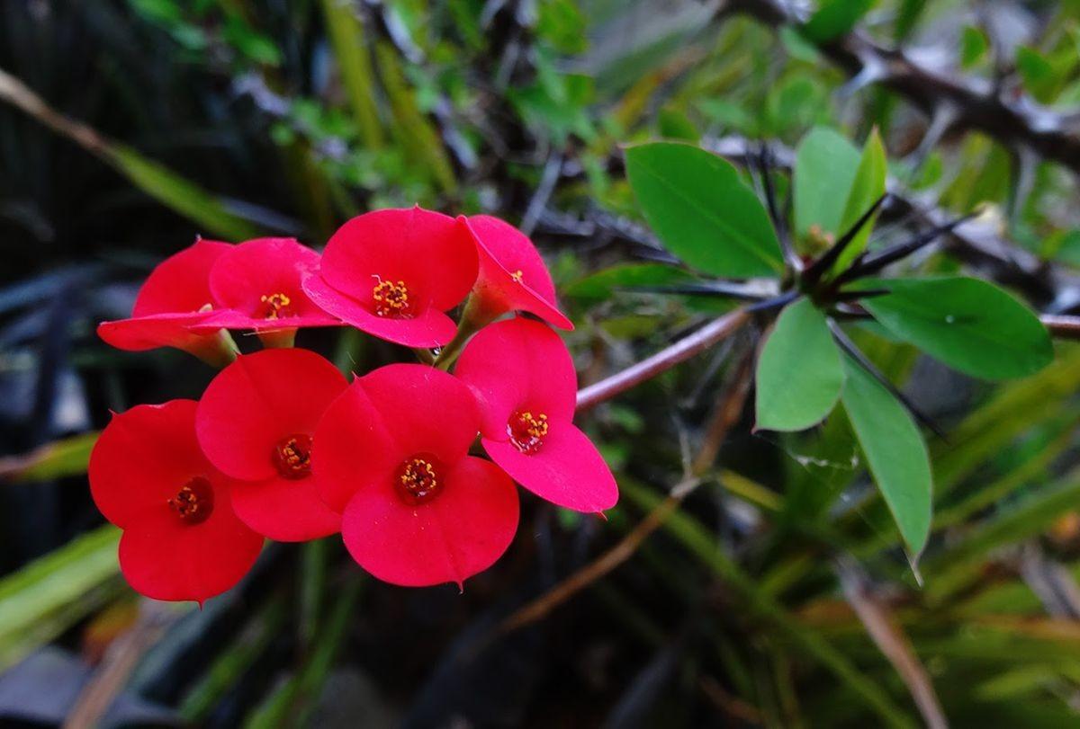 花卉日记-106_图1-9