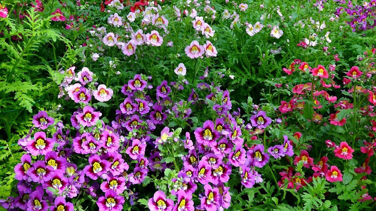 花卉日记-106_图1-10