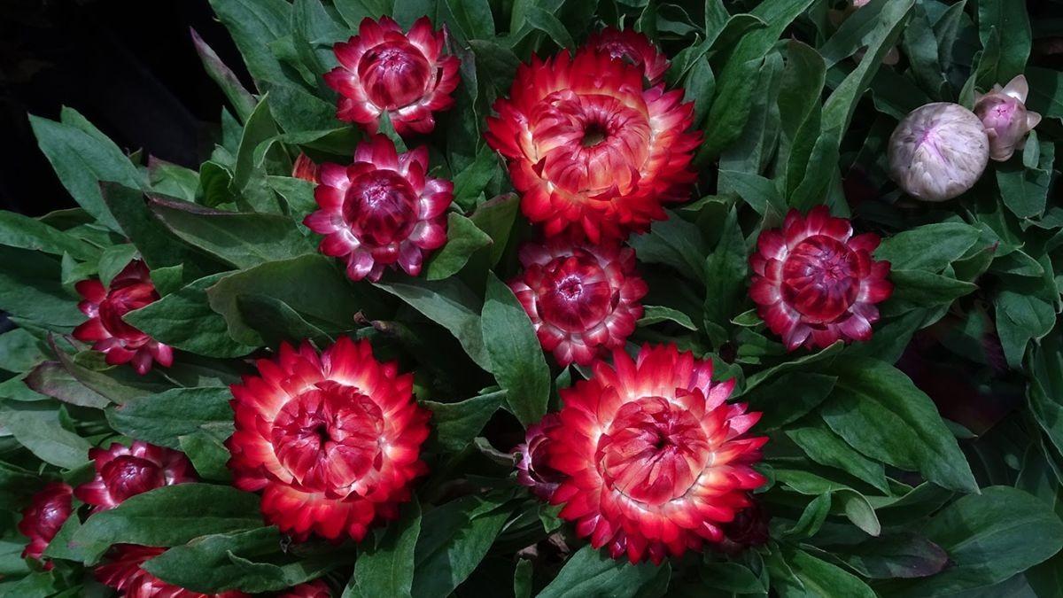 花卉日记-106_图1-12