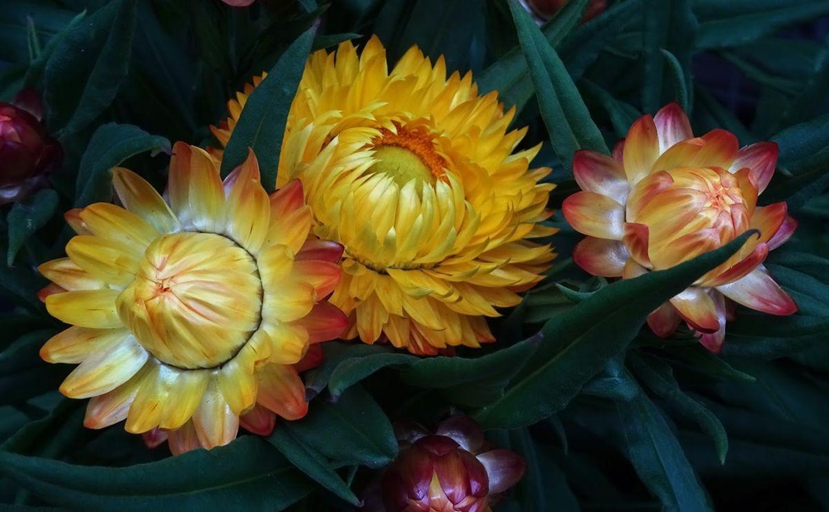 花卉日记-106_图1-13