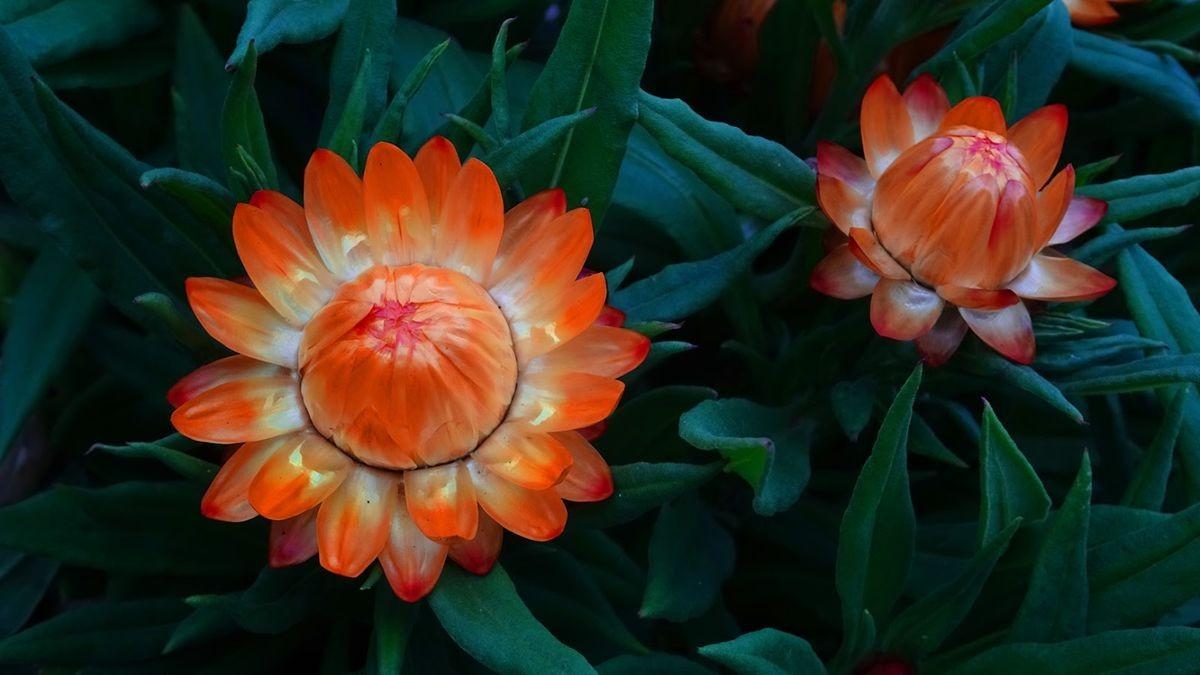 花卉日记-106_图1-15