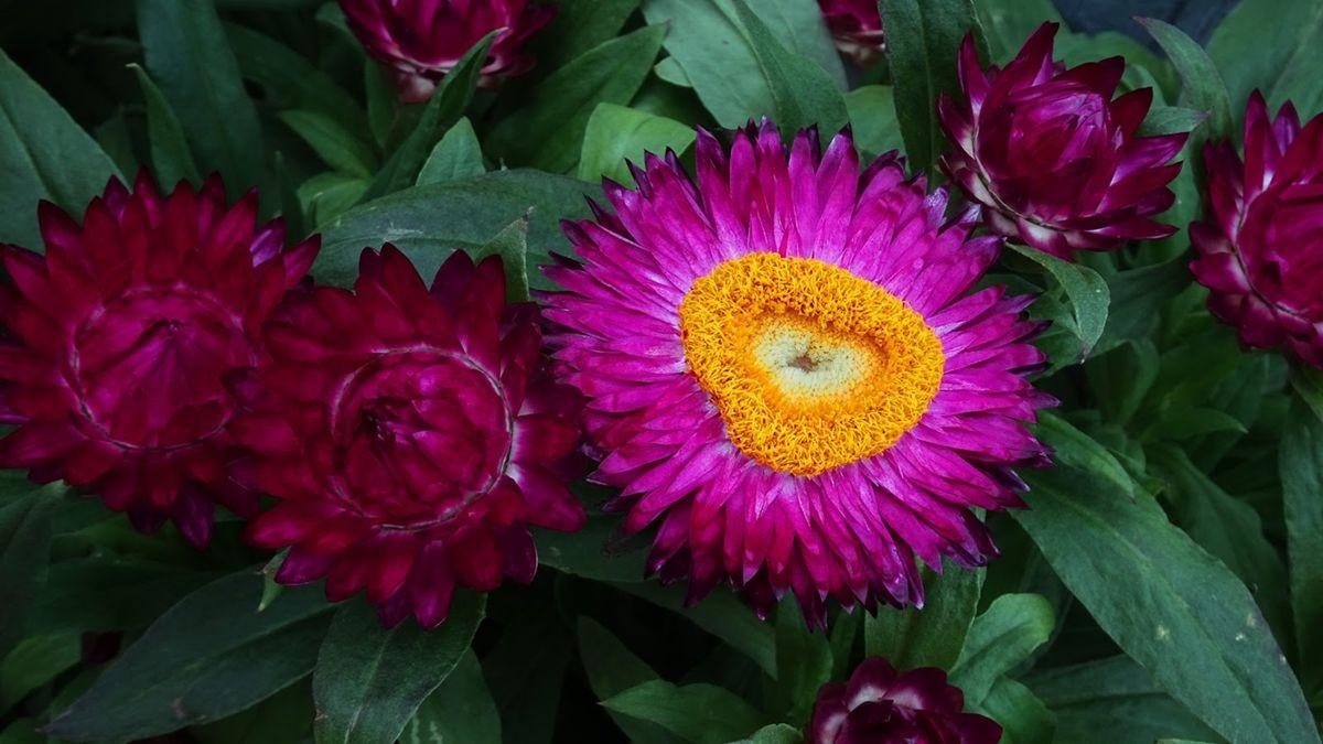 花卉日记-106_图1-17