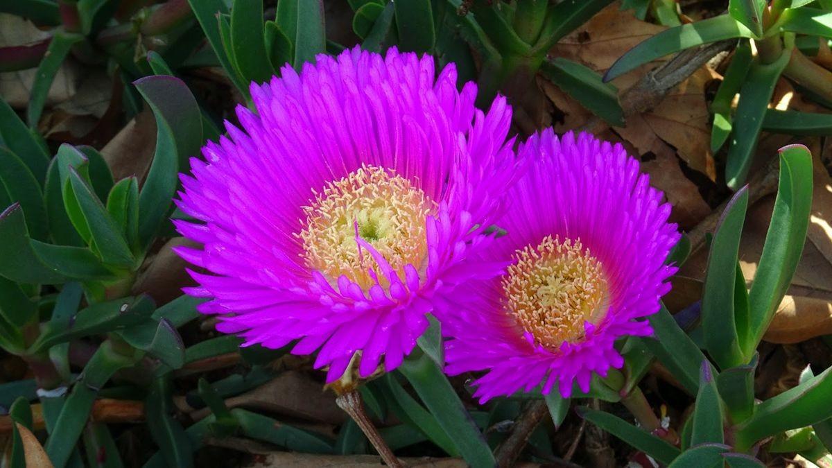 花卉日记-106_图1-18