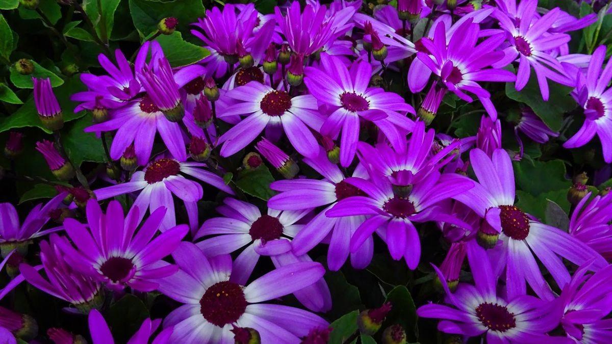花卉日记-106_图1-20