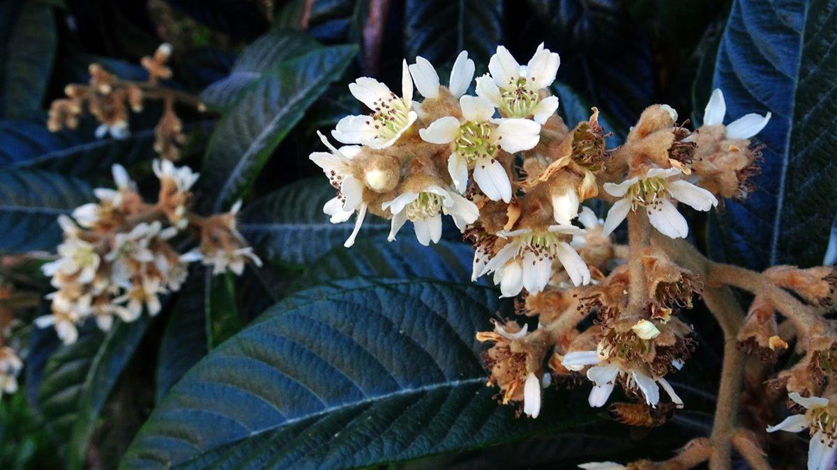 花卉日记-106_图1-21