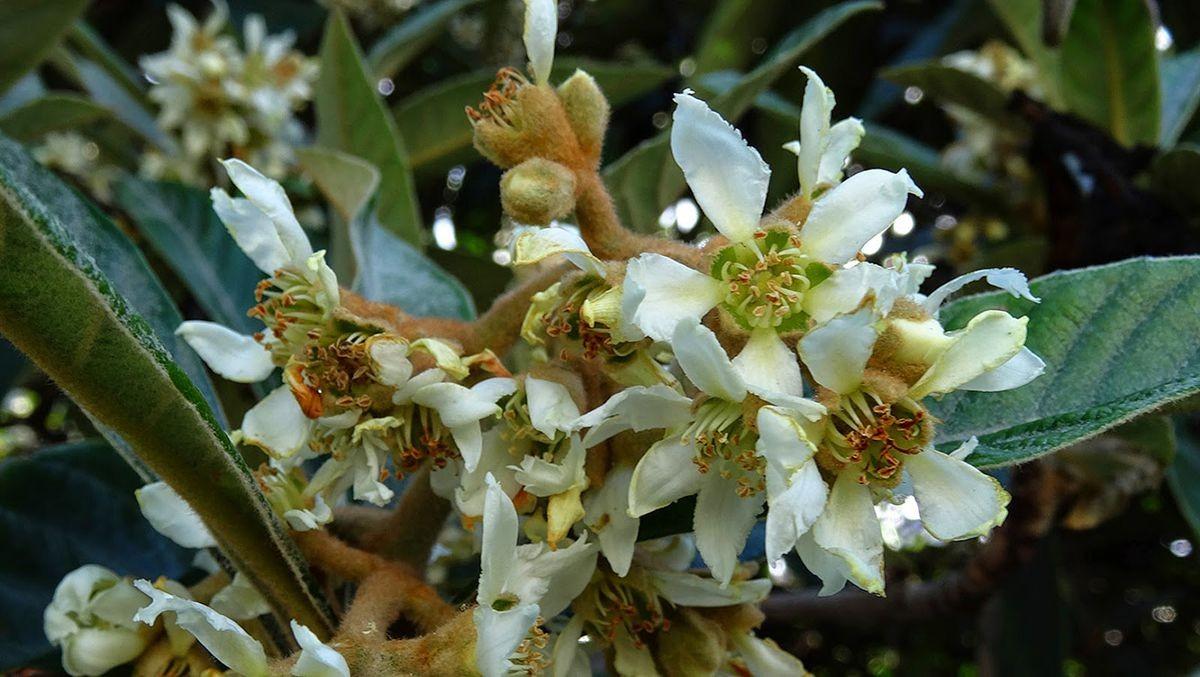 花卉日记-106_图1-22