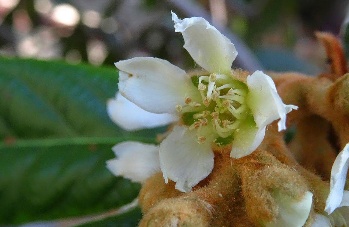 花卉日记-106_图1-23