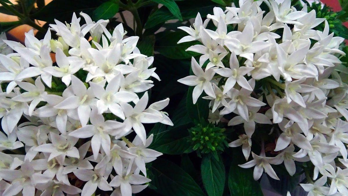 花卉日记-107_图1-2