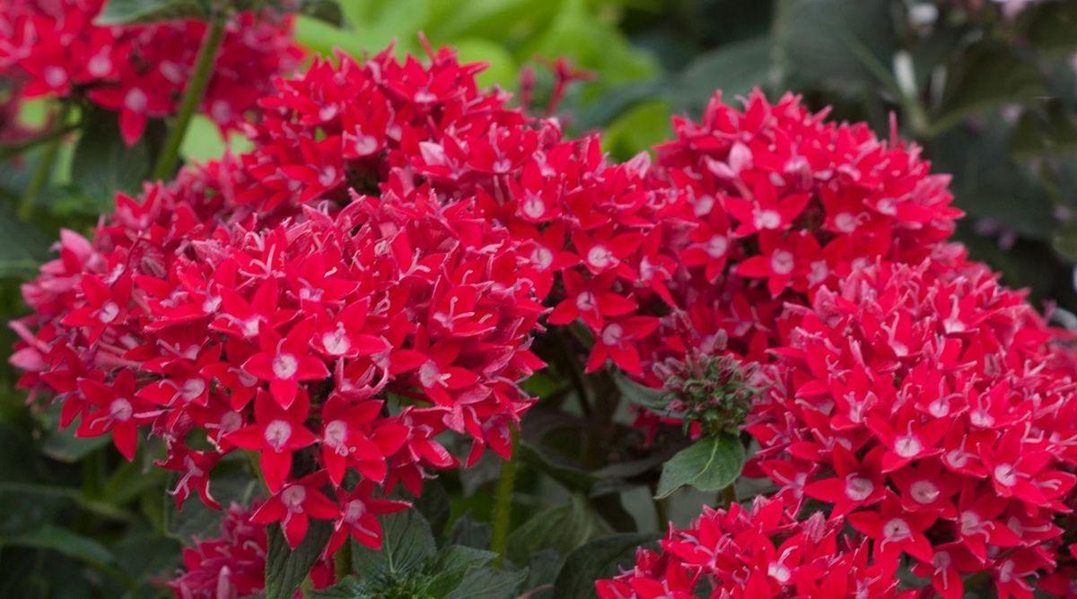 花卉日记-107_图1-3