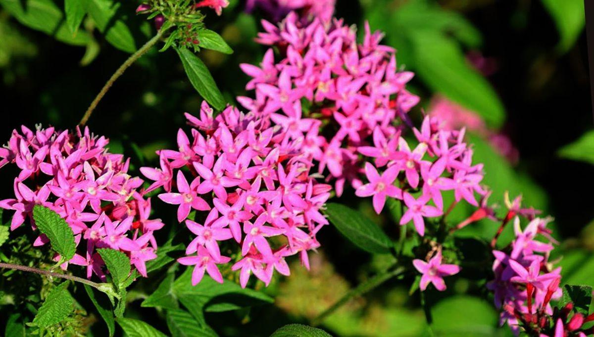 花卉日记-107_图1-4