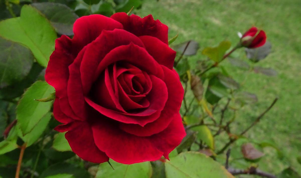 花卉日记-107_图1-5