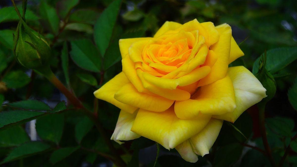 花卉日记-107_图1-6