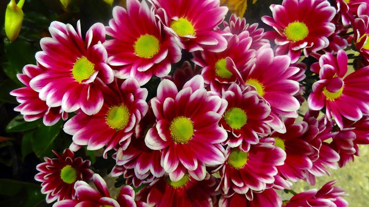花卉日记-107_图1-7