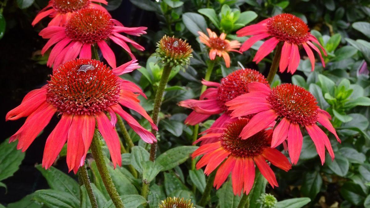花卉日记-107_图1-9