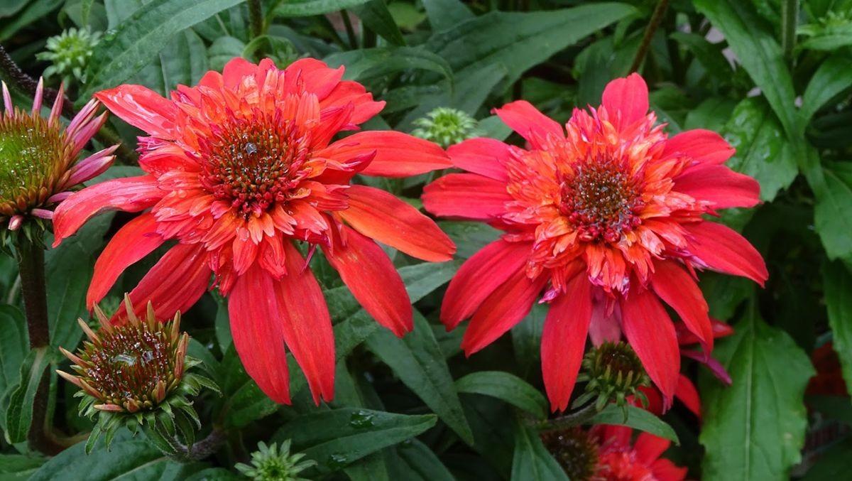花卉日记-107_图1-10